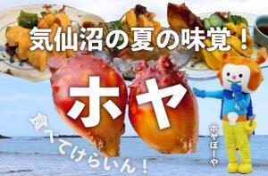 新鮮な気仙沼産ホヤ、ぜひお召し上がりください!気仙沼の夏の味覚「ホヤ」サプリとしてのサメ軟骨.com